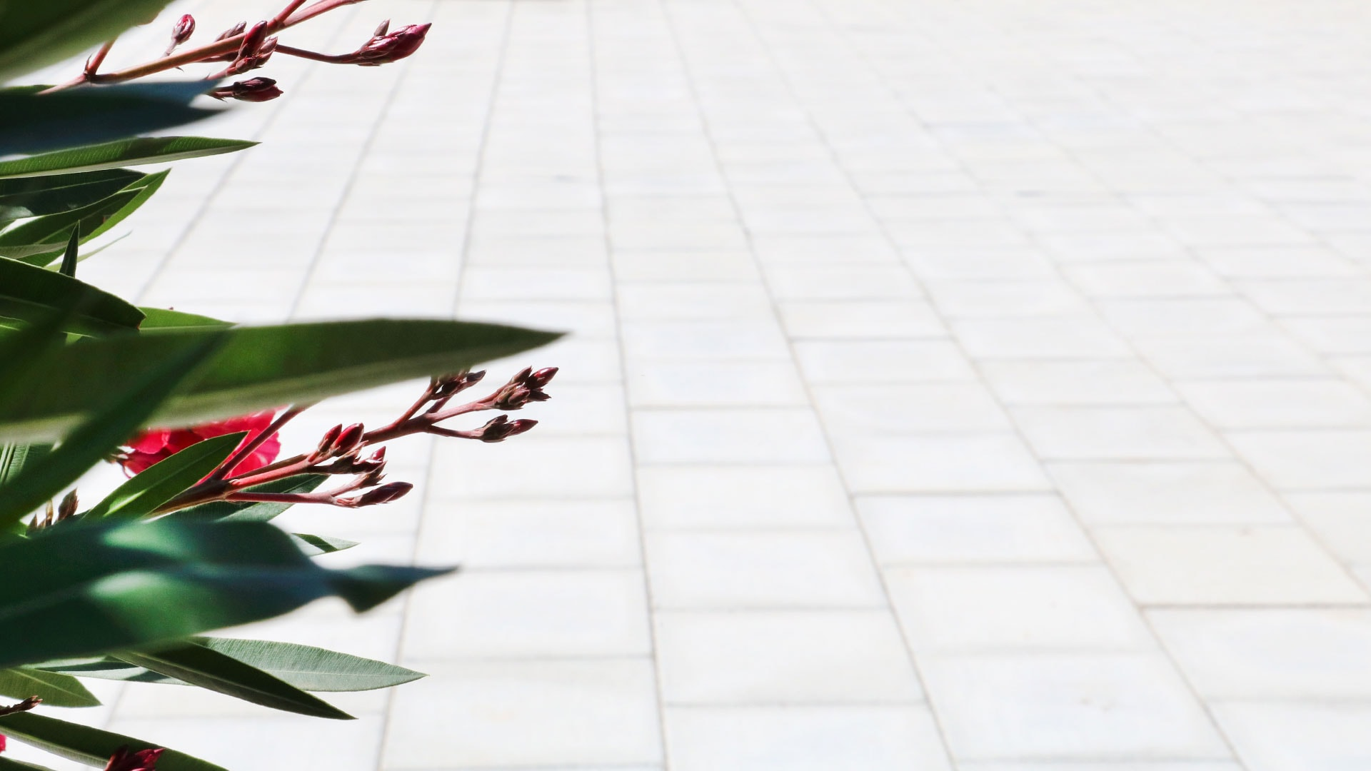 pujol-paviments-terratzo-exterior-masia-7